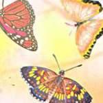 Butterflies - Vellum Paper